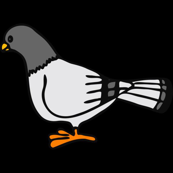 Pigeon 2 PNG Clip art