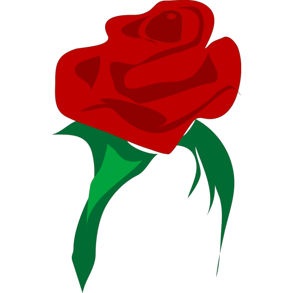 Rose Red Flower PNG clipart