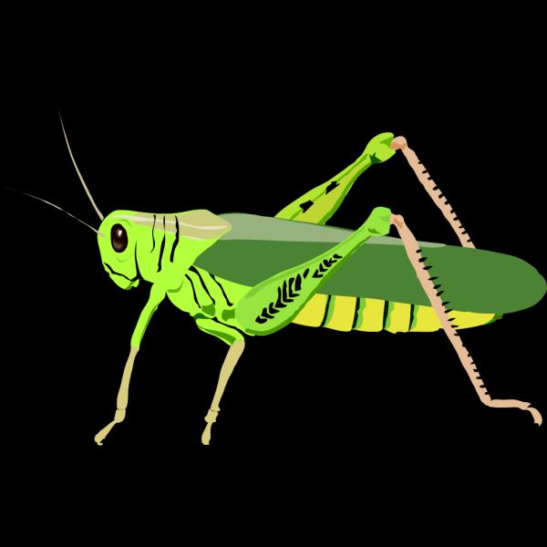 Grasshopper Locust PNG images
