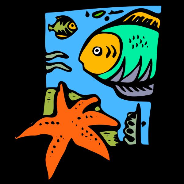 Fish Marine Life Starfish PNG Clip art