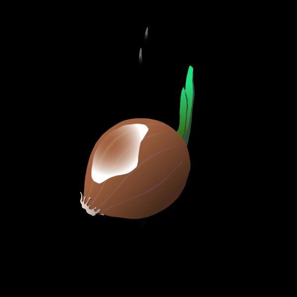 Onion PNG Clip art