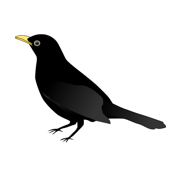 Blackbird PNG images