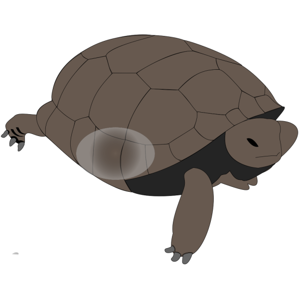 Turtle Penguin PNG images