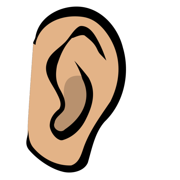 Ear - Body Part PNG Clip art