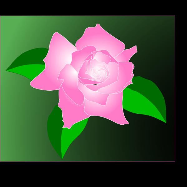 Pink-rose PNG Clip art
