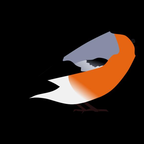 Bullfinch PNG Clip art