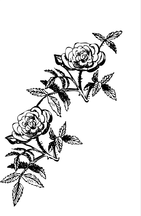 Rose PNG Clip art