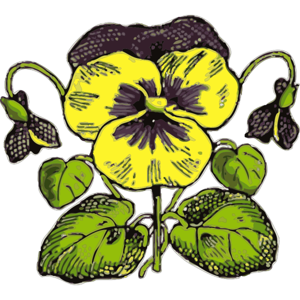 Pansy PNG Clip art