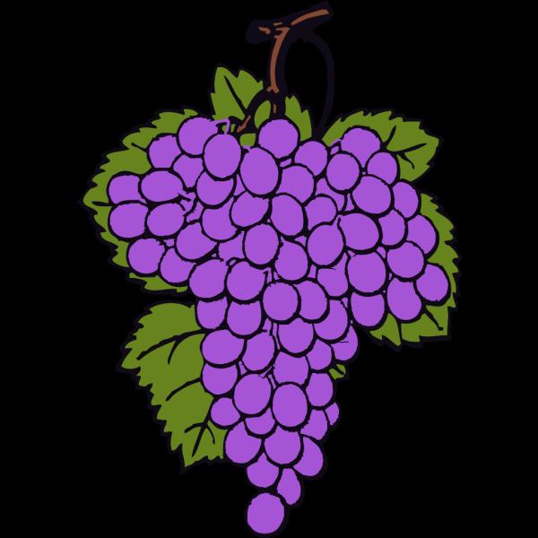 Grape Cluster 2 PNG Clip art