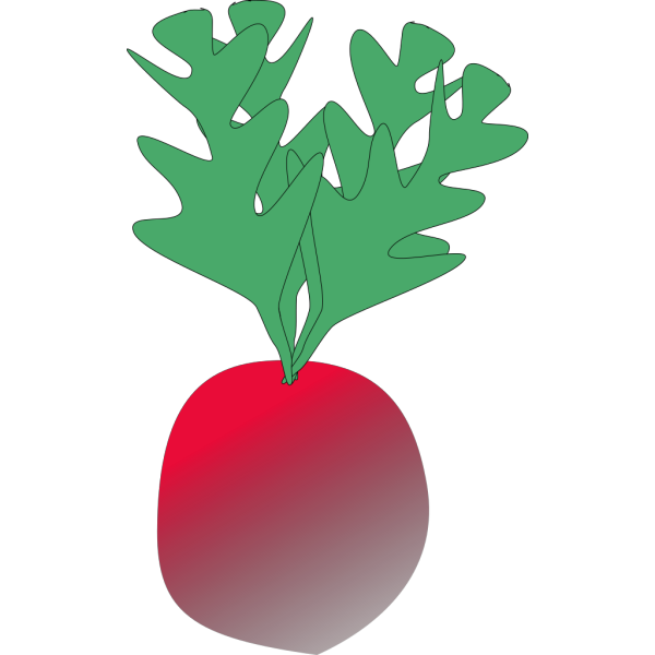 Radish 2 PNG Clip art