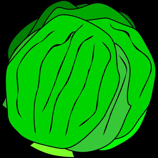 Whole Lettuce PNG Clip art