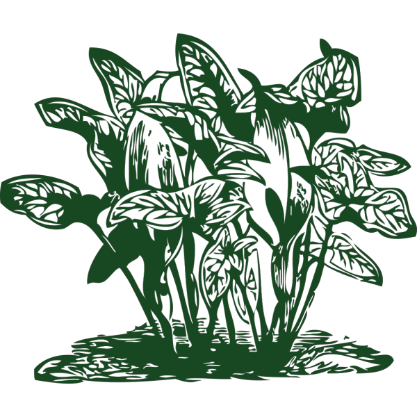 Tropical Plants PNG Clip art