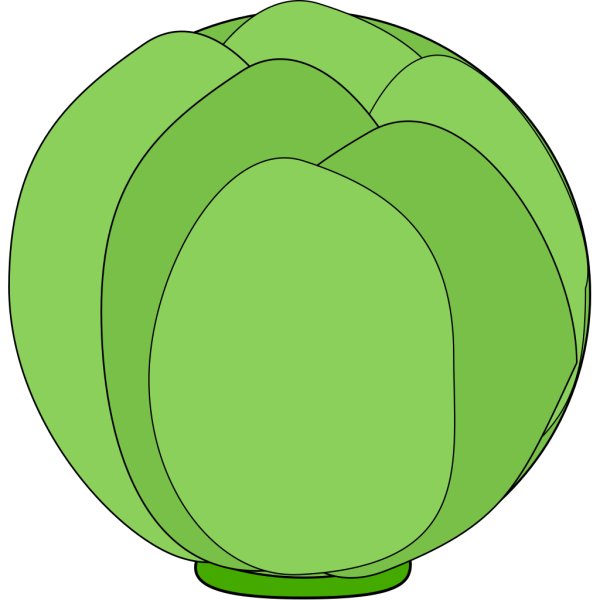 Cabbage PNG Clip art