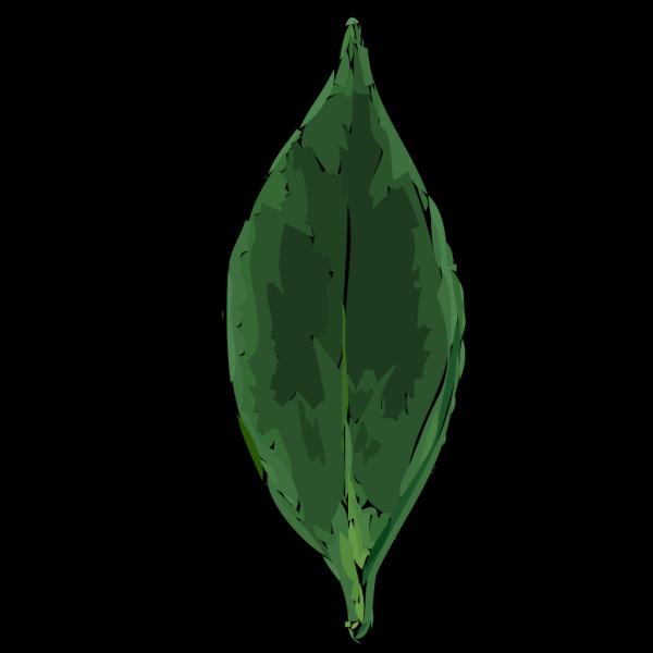 Tea Leaf PNG Clip art