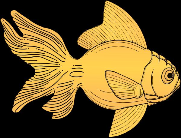 Goldfish PNG Clip art