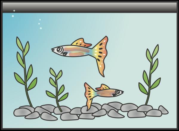 Generic Fish PNG clipart
