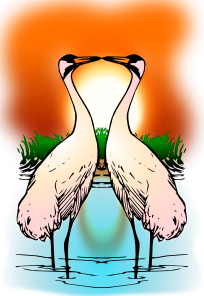 Valessiobrito Two Love Whooping Crane PNG images