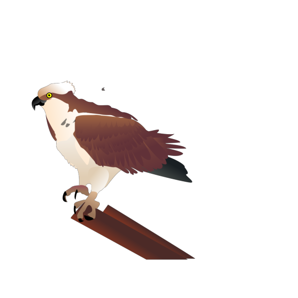 Osprey Standing On Branch PNG Clip art
