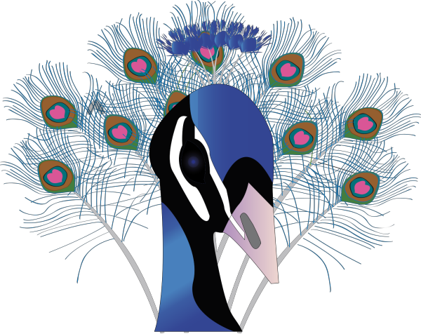 Peacock PNG Clip art