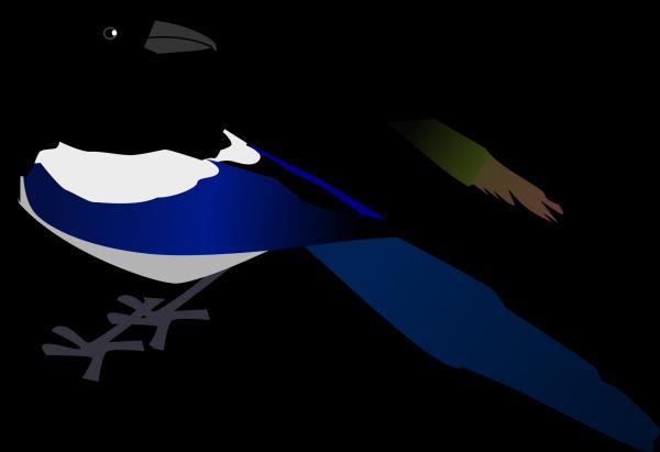 Magpie PNG Clip art