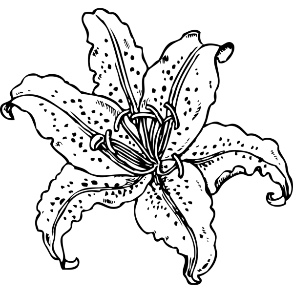Lilium Auratum PNG Clip art