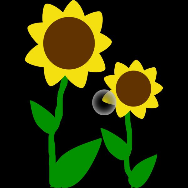 Slunecnice PNG Clip art