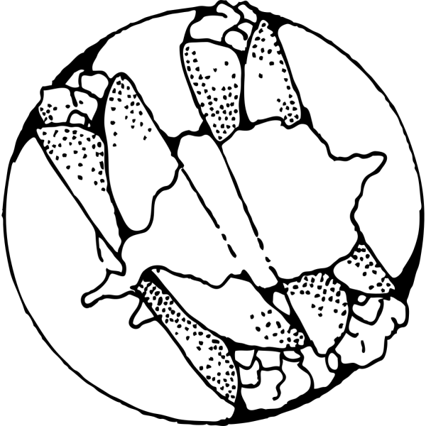 Crepes Outline PNG Clip art
