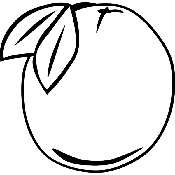 Orange Outline Fruit PNG Clip art