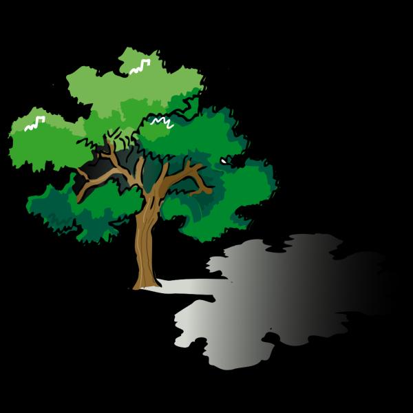Oak Tree PNG Clip art