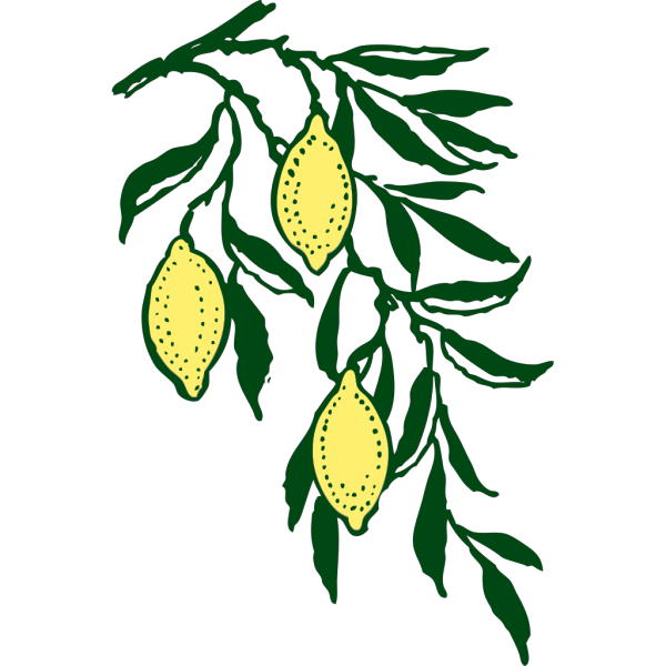 Lemon Branch PNG Clip art