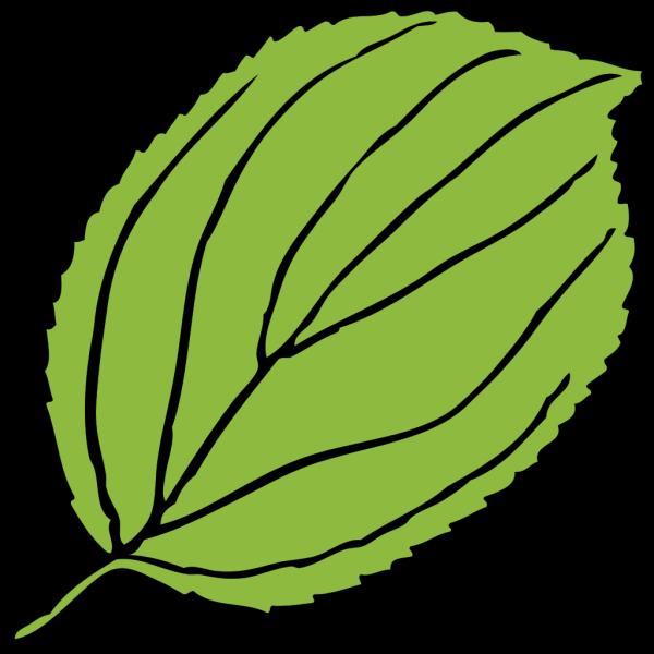 Serrate Leaf PNG clipart