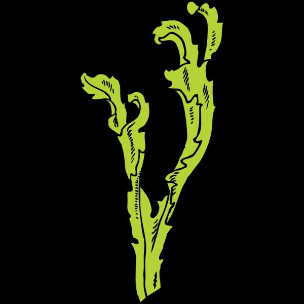 Sea Weed PNG Clip art