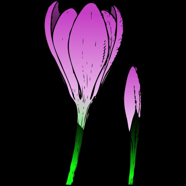 Crocus Flower Top View PNG Clip art