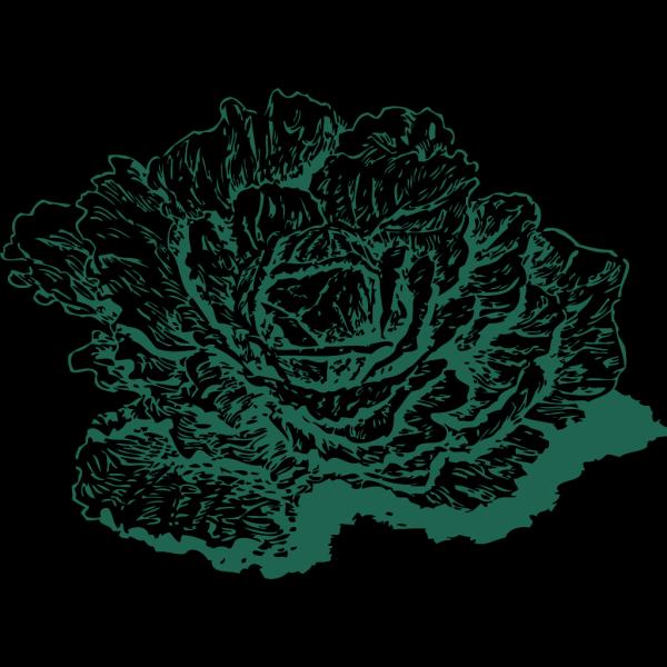 Dutch Cabbage PNG Clip art