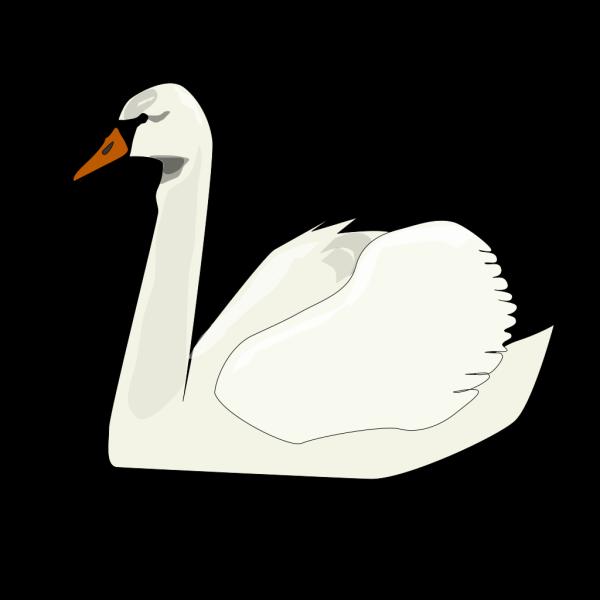 Swan2 PNG Clip art