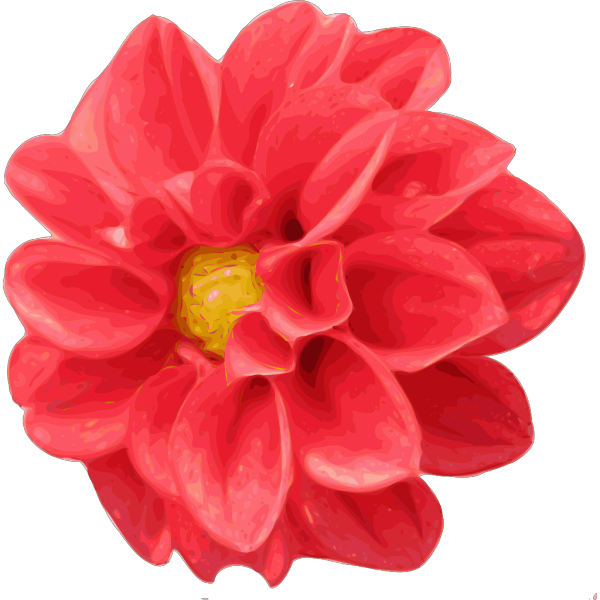 Dahlia Rose PNG clipart