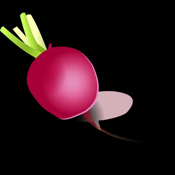 Raddish PNG Clip art