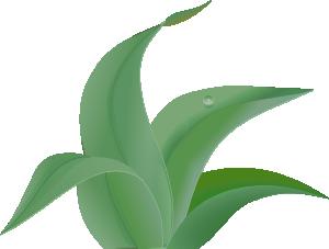 Leaves 2 PNG Clip art