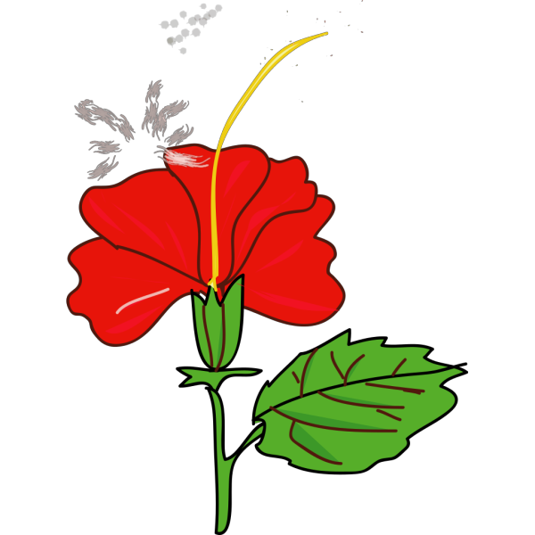 Flower Hibiscus PNG Clip art