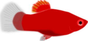 Red Aquarium Fish PNG Clip art