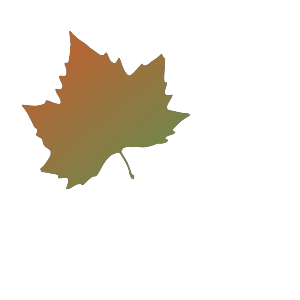 Kattekrab Plane Tree Autumn Leaf PNG Clip art