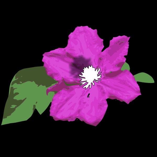 Pink Flower 14 PNG Clip art