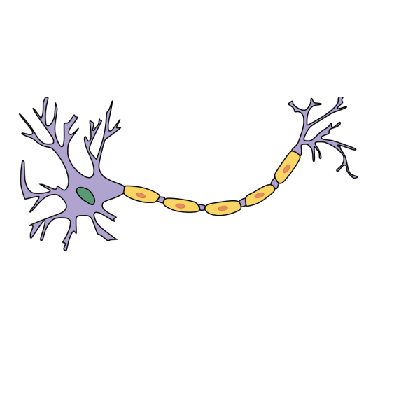Neuron With Axon PNG Clip art