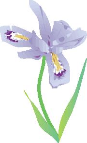 Dwarf Lake Iris PNG Clip art