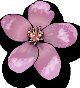 Apple Blossom PNG Clip art