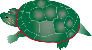 Painted Turtle PNG Clip art