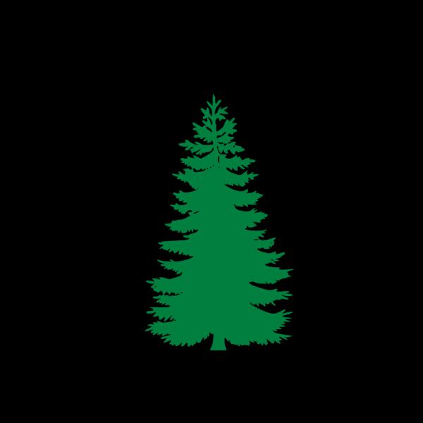 White Pine Tree PNG Clip art