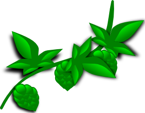 Hops Plant PNG Clip art