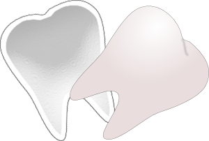 Tooth Cut In Half PNG Clip art