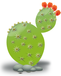 Cactus PNG clipart